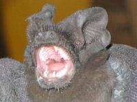 Bat028b