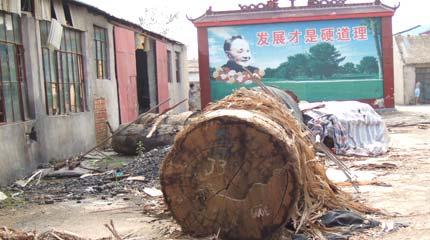 China has png timber