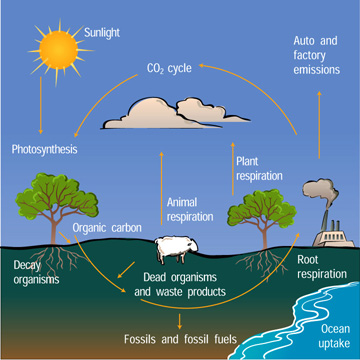 Carboncycle_sm
