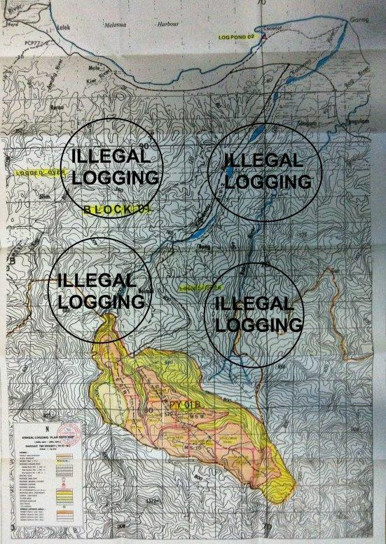 Illegal logging area