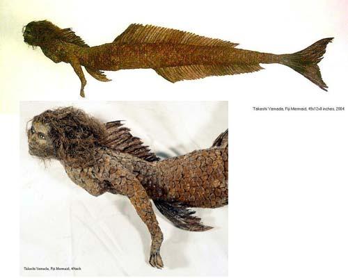 Mumified-real-mermaid-random-23800061-500-400