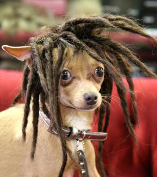 Dog-wig-1