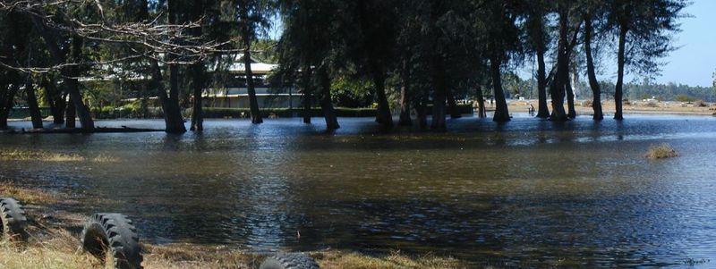Coastwatchers trees underwater 2001