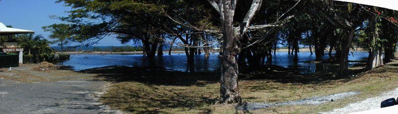 Coastwatchers trees underwater 2001 II
