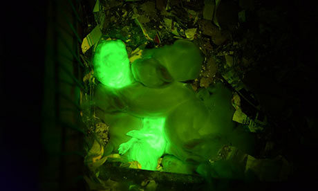 Glowing-green-rabbits-001